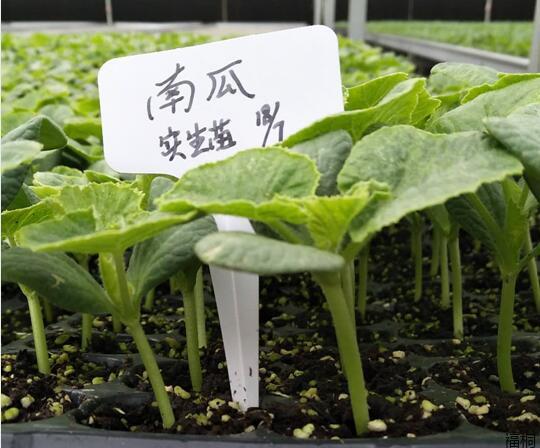 各種瓜菜苗