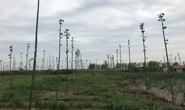 武漢農科院基地