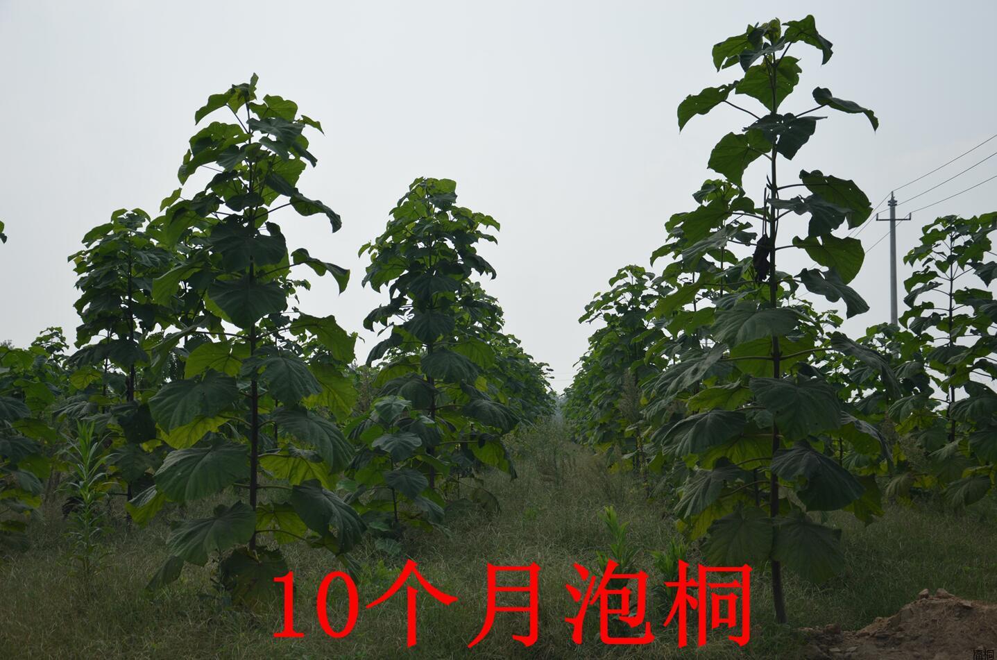 種植10個月